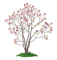 Magnolia tree with flowers and grass vector