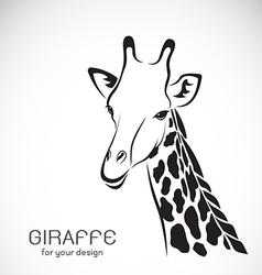 Giraffe head on white background vector