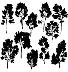 set of different trees with leaves vector image vector image