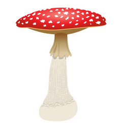 Fly agaric mushroom isolated on white background vector