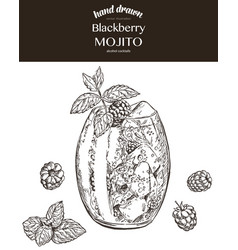 Blackberry mojito sketch vector