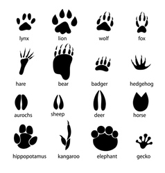 Set of different animal tracks vector