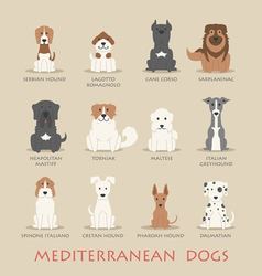 Set of mediterranean dogs vector