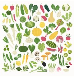 Vegetables and herbs vector