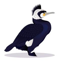 cormorant bird vector image vector image