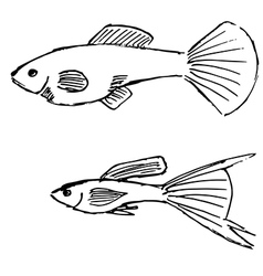 guppy fish vector image