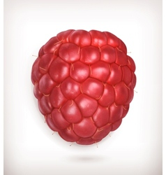Raspberry high quality vector image