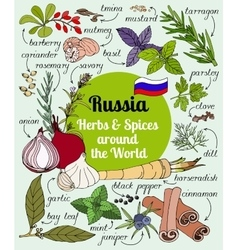 Russian herbs and spices vector