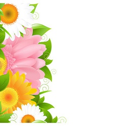 Flower gerbers and leaves vector