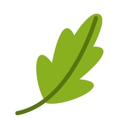 Coriander vegetable ingredient health icon vector