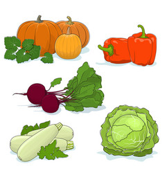 Gardening vegetables isolated on white vector