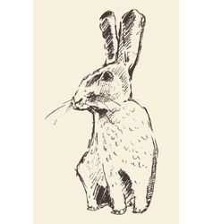 Rabbit engraving style vintage hand drawn sketch vector image vector image