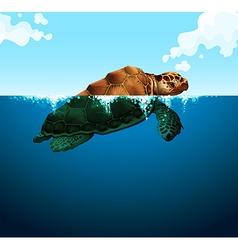 Turtle swimming in the ocean vector