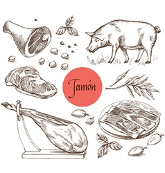 Jamon meat beef spices for meat vector