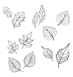 Black leaves vector