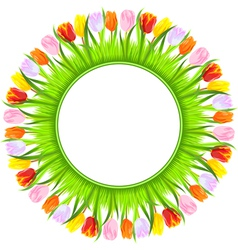 colorful spring tulips vector image