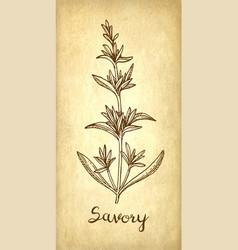 Savory ink sketch vector
