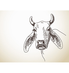 Long ears of cattle vector