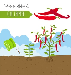Gardening work farming chili pepper graphic vector