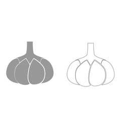 garlic grey set icon vector image