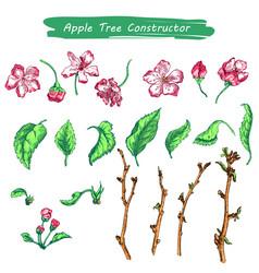 appler sketch color vector image vector image