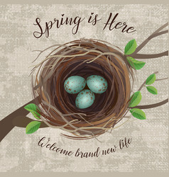 Birds nest with blue speckled eggs vector