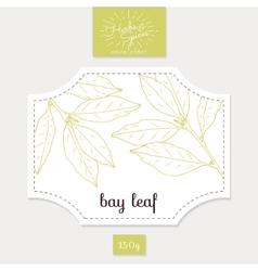 Product sticker with hand drawn bay leaves spicy vector
