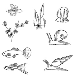 fish sketch vector image
