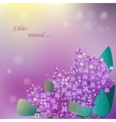 Lilac blooming flower vector