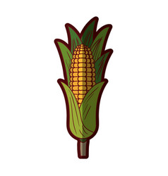 White background with corn cob with leaves with vector