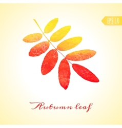 Autumn rowan leaf isolated element vector