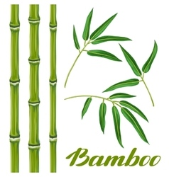 Set of bamboo plants and leaves objects for vector