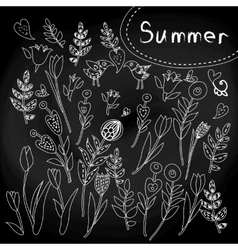 Floral set on chalkboard vector