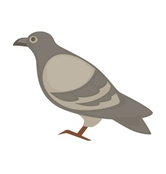 Pigeon cartoon bird isolated vector