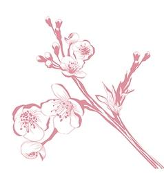 Vintage cherry blossom branch vector