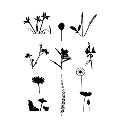 Collection of flower isolate vector