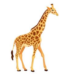 Giraffe standing isolated vector