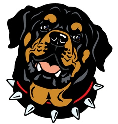 rottweiler head vector image