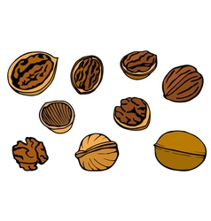Walnut set hand drawn vector image