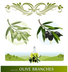 set - olive branches vector image