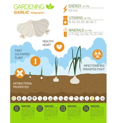 Gardening work farming infographic garlic graphic vector