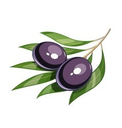 Pair of black olive vector