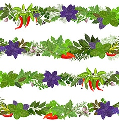 seamless border of collection herbs and spices vector image vector image