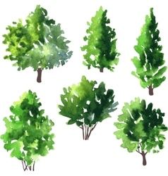 Set of different deciduous trees vector