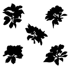 apple flowers silhouettes vector image vector image