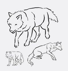 wolf wild animal hand drawing vector image