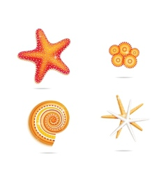 Tropical sea stars vector
