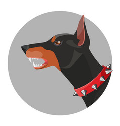 Angry doberman with open mouth and red collar vector