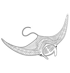 hand drawn swimming manta with high details vector image
