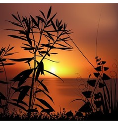 Sunset and plants silhouettes vector